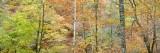 photograph, course of nature, nature, autumn, leaves, colours, glen lyon, perthshire, scotland, panoramic