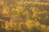 autumn, gold, rannoch, perthshire, scotland, early morning, backlight, glowing, stunning sunrise photo, image, tree