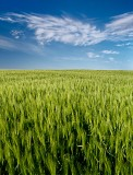 cloud formation, ripening, barley, angus, scotland, field,