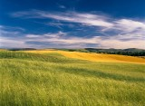 cloud formations, countryside scenery, barley, field, rolling hills, summer, angus, scottish