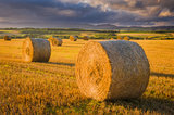 harvest, hay, bales, golden glow, perthshire, low angled light, farmlands