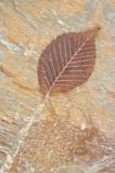 leaf, rock, slab, image, palette brown, contrast, dunkeld, perthshire