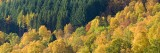 forests, image, coniferous, deciduous, conifer, colourful, contrasts, visual, perthshire, scotland