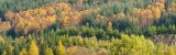 perthshire, autumn, woodland, autumn, colours, textures, trees, perthshire, scotland, dunkeld