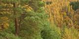 wooded slopes, ravine, types of trees, lednock, perthshire, hillside