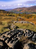 autumn, hillside, colourful, trees, scottish, classic, loch, limestone, outcrop, rannoch, perthshire
