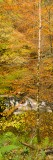 river, autumnal, autum, forest, vertical, panoramic, format, trees, conceal, aberfeldy, perthshire, scotland