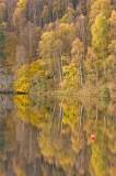 silver birch, autumn, reflections, loch, pitlochry, perthshire, scotland
