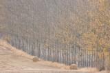 autumn, harvest, longforgan, perthshire, scotland, muted, colours, farm landscape, farming, mist