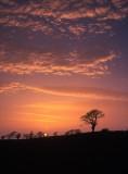 sunset, tree, sun, vividness, angus, scotland, newbigging, clouds