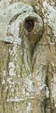 details, landscape, tree, trunk, elephant's, eye, angus, scotland, texture, bark, elephant, skin