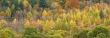 autumn, autumnal, colours, hillside, panoramas, trees, image, wonderful, horizontal, perthshire, scotland, dunkeld
