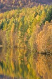 autumn, gold, loch, color, image, faskally, pitlochry, perthshire