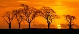 trees, sunrise, silhouette, cloud, sun, orb, angus, scotland, spring