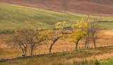 trees, hillside, coloured, boundaries, branches, glen, lednock, perthshire, scotland