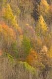 autumn, leaves, trees, branches, autumn season, textural, autumn landscape, season, perthshire, scotland