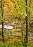 autumnal, river, autumn, tree, riverbank, elusive, images, images, fall colors, garry, perthshire, scotland