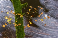 flowing, stillness, leaves, mossy, tree, trunk, swirling, patterns, composition, autumn, river