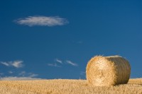 straw, hay, bales, fields, harvest, crops, agricultural, angus, scotland