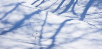 snow, trees, shadows, isolated, winter, snowy