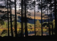 lochs, forest, image, tree, trunks, mountains, snow, cairngorms, scotland