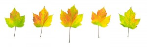 autumn, leaves, panorama, scotland, colour, transitions, greens, yellows, oranges