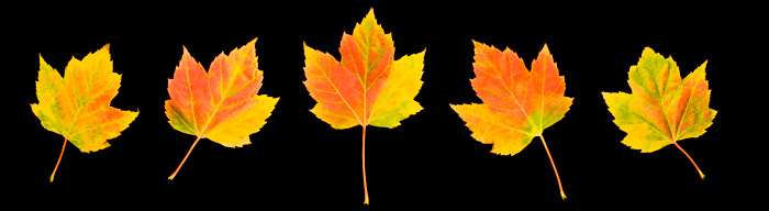Autumn Leaves Panorama Fantastic Color Images Colour Amazing