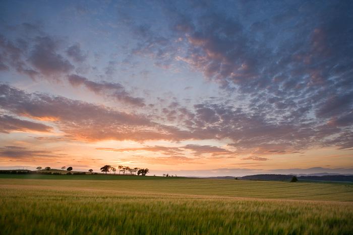 barley, field, sunset, fife, scotland, farm landscape, big sky, delicate, colours, clouds, peacefullness, warm, photo