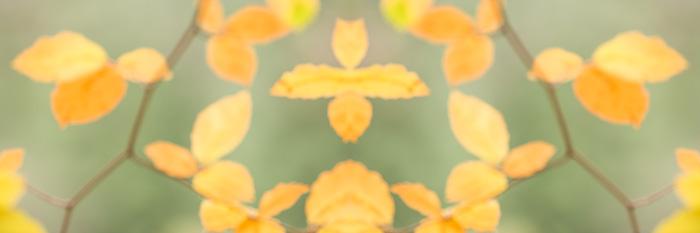 beech, leaves, mirror, techniques, impressionistic landscape, natural, world, de-focussed, tonal, contrast, photo