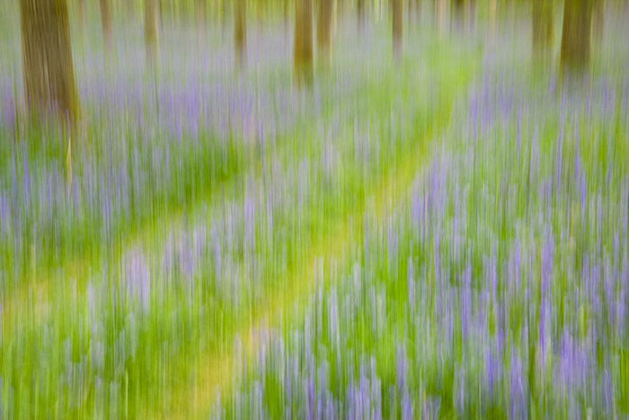 track, bluebells, woodland, spring, trees, forest, perthshire, scotland, abstract, photo