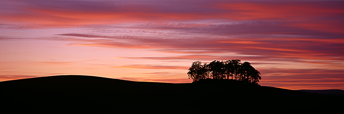 image, sunset, copse, trees, silhouette, brechin, angus, scotland, cloud formations, photo