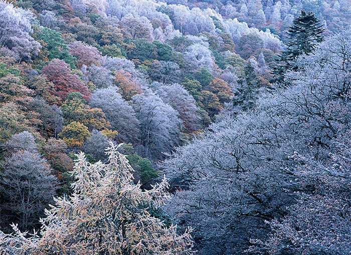 trees, leaves, autumn, frosted, frost, branches, killiecrankie, perthshire, scotland, photo