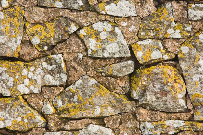 lichen, stone, wall, texture, stones, balmullo, fife, scotland, photo