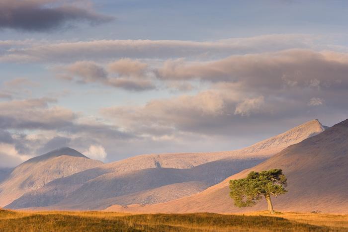 light, shade, landscape, caledonian pine, hillside, rich, autumn, colours, scene, glen kinglass, argyll, scotland, photo