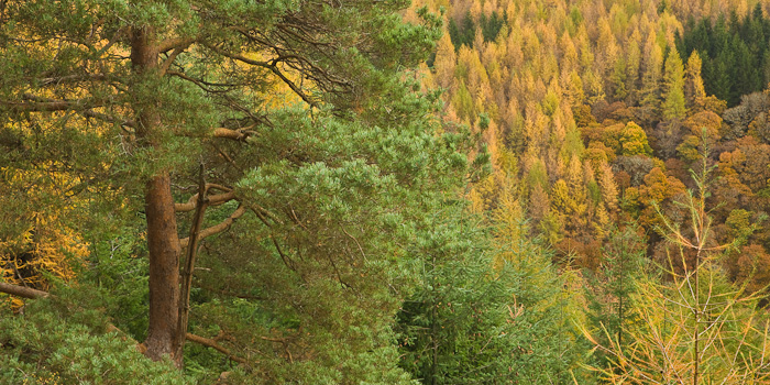 wooded slopes, ravine, types of trees, lednock, perthshire, hillside, photo