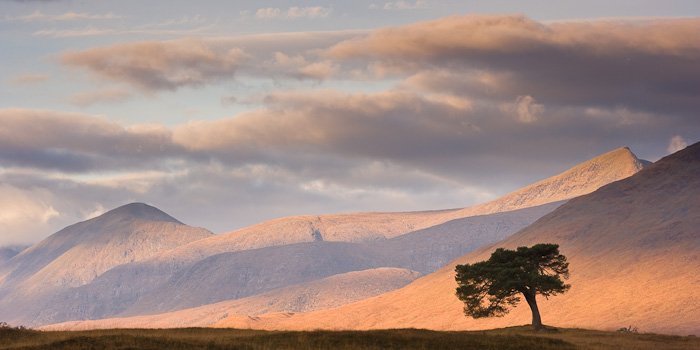 shade, light, glen kinglass, argyll, scotland, pine tree, tree, graphical, silhouette, mountain, photo