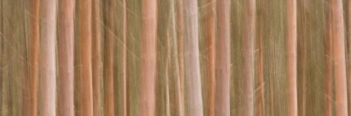 cairngorms, national park, branches, trunk, tree, digital photography, blur, kincraig, scotland, panning, photo