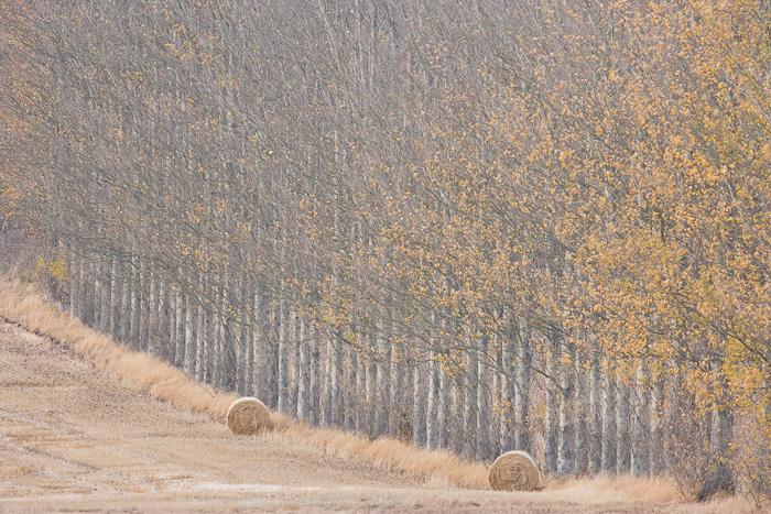 autumn, harvest, longforgan, perthshire, scotland, muted, colours, farm landscape, farming, mist, photo