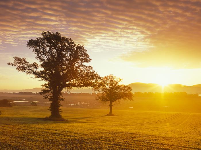 golden, sunrise, sun, gold, farming, landscape, mackerel clouds, clouds, barley, crop, errol, perthshire, scotland, photo