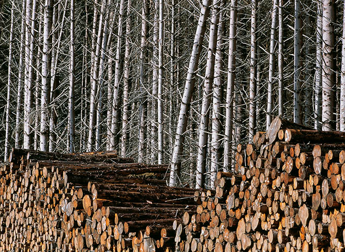 tree, stack, log, forest, forest landscape, lochaber, scotland, cleared forest, photo