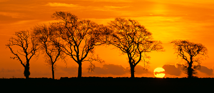 trees, sunrise, silhouette, cloud, sun, orb, angus, scotland, spring, photo