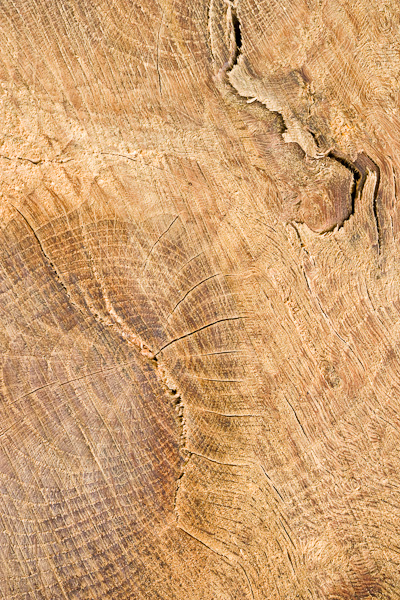 tree trunk, abstract, glen lyon, perthshire, scotland, photo