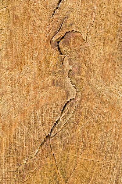tree, trunk, glen lyon, perthshire, scotland, photo