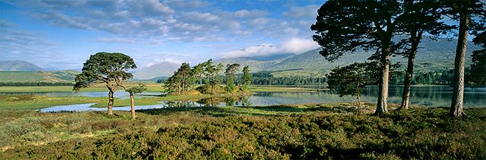 beautiful, spring, stunning scenery, loch, loch tulla, caledonian, pines, argyll, scotland, scottish midges, photo
